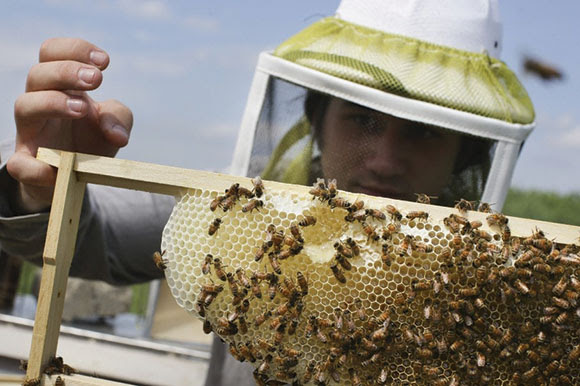EPA Blocks a Dozen Products Containing Pesticides Thought Harmful to Bees